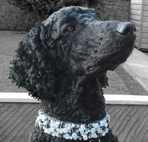 The Diceman Cometh.  Beaded Dice dog collar - Holly & Lil Collars Handmade in Britain, Leather dog collars, leads & Dog harnesses.